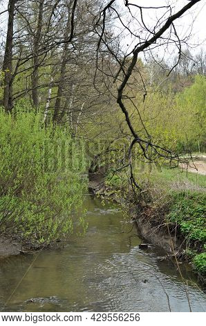 View Of A Stream With Muddy Water After Rain. Spring Forest Panorama.