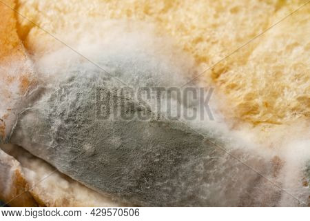 Moldy Bread Close Up As Background And Texture