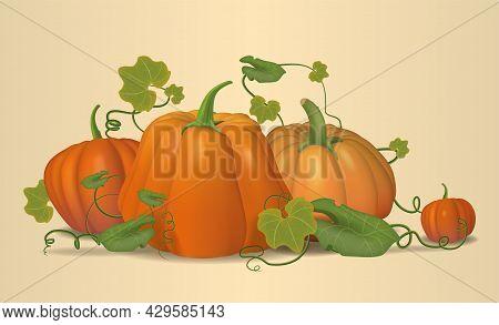 Vegetable Harvest, Ripe Pumpkins, Harvesting Season. Pumpkins, Autumn, Pumpkin Still Life. Vector.