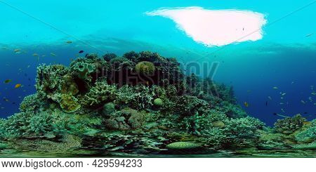 Tropical Fishes And Coral Reef At Diving. Underwater World With Corals And Tropical Fishes. Virtual