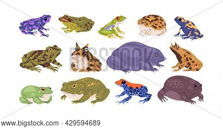 Set Of Frogs And Toads Of Different Species. Variety Of Exotic Amphibian Animals. Tropical Reptiles.