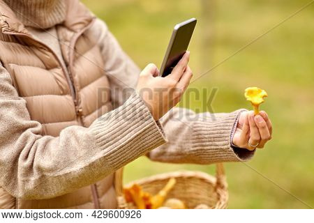technology, leisure and people concept - close up of young woman with smartphone using app to identify mushroom in autumn forest