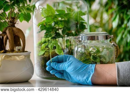 Caring for plants. Woman presenting a small new plant  for her forest in a jar with moss and green plant, a trendy concept in recent years. Bonsai nearby.
