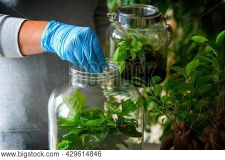 Caring for plants. Woman putting a small new plant for her forest in a jar with moss and green plants, a trendy concept in recent years. Bonsai nearby.
