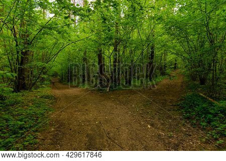 Trail In The Evening Summer Forest.summer Nature