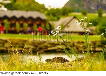 Flowers On River Shore, Tourist Attraction Flam Village In Norway