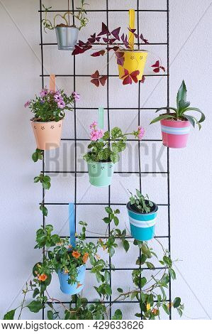 A Wire Mesh With Hanging Decorative Colorful Flower Pots With A Variation Of Beautiful Potted Flower