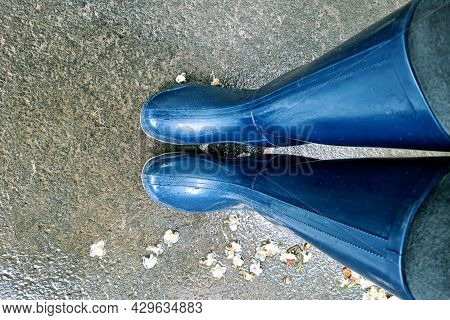 Female Feet, Top View. Foot And Legs In Blue Rubber Boots. Legs Are In A Puddle. Legs Outside