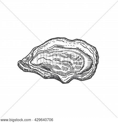 Hand Drawn Open Oyster Shell Vector Illustration. Abstract Seafood Sketch. Mollusk Engraving Style D