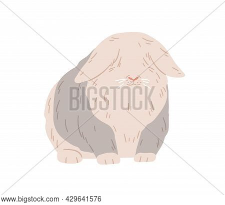 Cute Lop Angora Rabbit. Happy Fuzzy Ram Bunny Standing. Domestic Animal With Fluffy Fur On Eyes. Eng