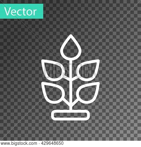 White Line Plant Icon Isolated On Transparent Background. Seed And Seedling. Leaves Sign. Leaf Natur