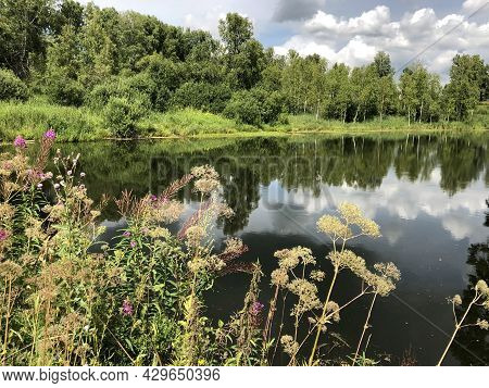 Different Meadow Flowers And Herbs Near The River In Siberia Russia