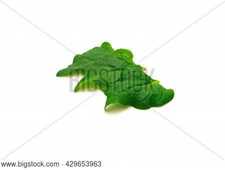 Three Homegrown New Zealand Spinach Or Tetragonia Tetragonioides Leaves Isolated On White