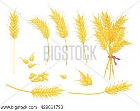 Cartoon Ripe Gold Wheat Plant, Grain And Ear. Yellow Single Spikelet, Bouquet And Seed. Farm Crop, B