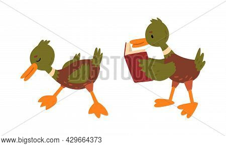 Male Mallard Duck With Orange Bill Standing And Reading Book Vector Set