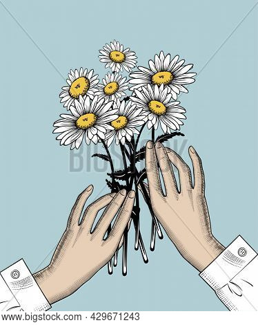 A bouquet of daisies in female hands. A female hand holds white chamomile flowers. Valentine postcard design in retro style. Vintage color engraving stylized drawing.