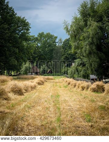 Traditional Harvesting Grain Crops.  Sheaves Of Grain In The Field, Trees In Background, Summer Day.