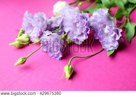 Beautiful Purple Eustoma Flowers (lisianthus) In Full Bloom With Buds Leaves. Bouquet Of Flowers On