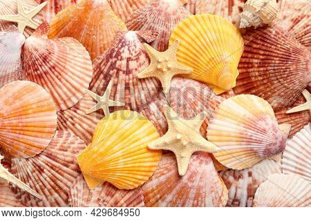Top View Of Beautiful Color Seashells And Starfishes As Background