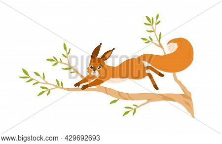 Cute Small Squirrel Jumping On Tree Branch. Happy Forest Rodent With Bushy Tail On Sprig. Adorable F