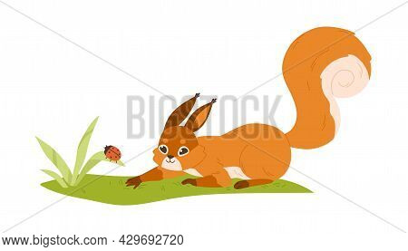 Cute Small Squirrel Playing With Ladybug In Nature. Forest Rodent With Bushy Tail Hunting On Bug. Ha