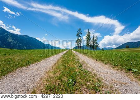 Path Through Alpine Mountain Meadow With Five Large Larch Trees During Sunny Summer Day With Scenic