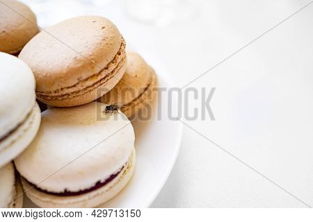 Fly On Macaroon Cakes. Traps For Flies And Mosquitoes.