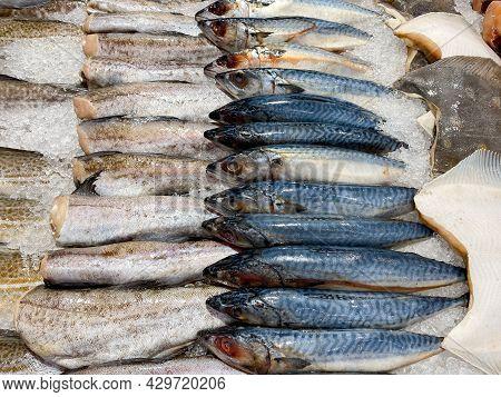 Fresh Mackerel, Pollock, Flounder On Ice. Chilled Natural Seafood. Mediterranean Cuisine.