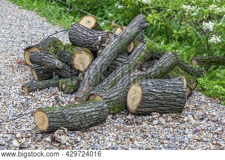 Trunks Of Sawn Trees Lie On The Ground In The Park