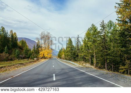 Colorful Autumn Landscape With Birch Tree With Yellow Leaves In Sunshine Near Mountain Highway. Brig