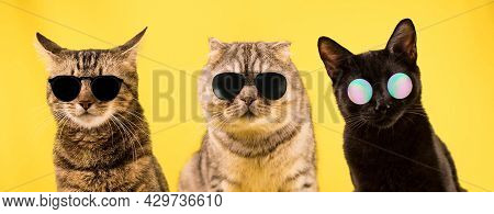 Three Cats In Dark Glasses On A Yellow Background. Cool Cats, A Cat Gang.