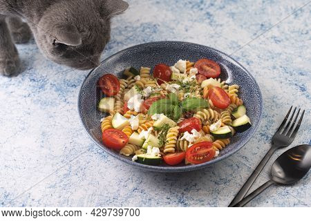A Grey Cat Smelling On Italian Pasta Fusilli Tricolore With Cherry Tomatoes, Zucchini And Feta Chees
