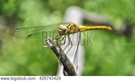 A Small Creature Resembling A Helicopter. The Delicate Existence Of Nature.