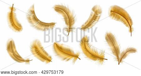 Realistic 3d Fantasy Bird Fluffy Golden Feathers. Decorative Gold Glamour Chic Plume. Flying, Fallin