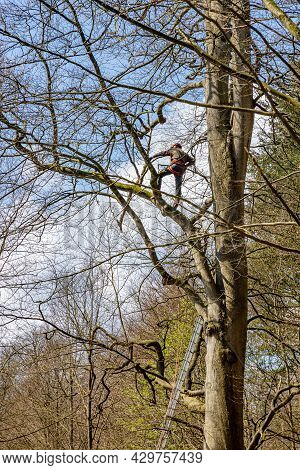 Apeldoorn, Gelderland In The Netherlands. April 19, 2021. Man Trimming A Bare Tree With Safety Ropes