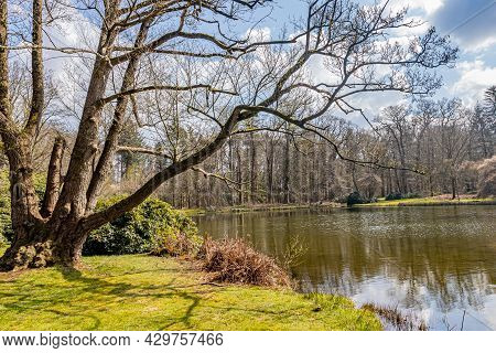 Bare Tree With Thick Trunk And Branches With A Lake With Reflection In The Water Surface And Trees I