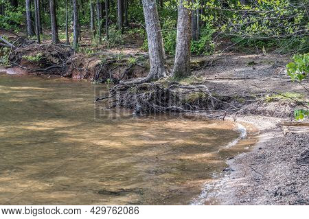 Severe Erosion At The Lake With Low Water Levels Exposing The Tree Roots Along The Trails In Late Sp