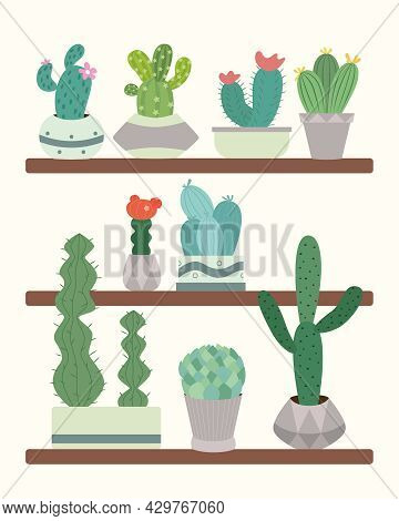 Cute Green Cacti With Thorns In Flowerpots Are On A Shelf In A Greenhouse.  Plants And Nature, House