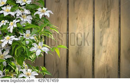Clematis Flower On A Wooden Background With A Copy Space. Use For Background, Postcards.