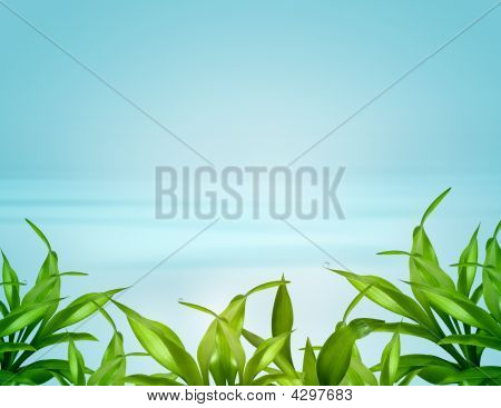 Bamboo Leafs Over Blue Background
