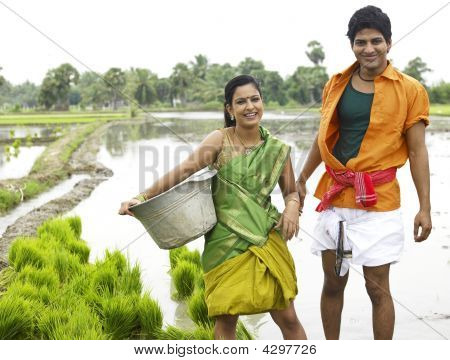 Asian Farmer Couple Working In A Paddy Field