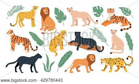 Big Feline Family Animals, Tiger, Lion, Cheetah And Leopard. Wild Cats From Savanna And Tropical For