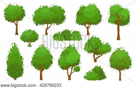 Cartoon Green Trees, Bushes And Hedges, Forest Or Garden Tree. Summer Foliage Plants, Backyard Shrub