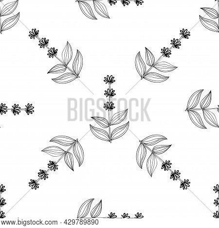 Gentian, Seamless B-w Dd Ww Herb Isol