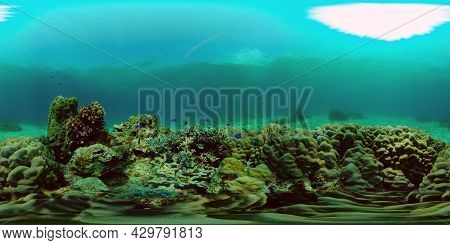 The Underwater World Of Coral Reef With Fishes At Diving. Coral Garden Under Water. Coral Reef Fish