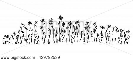 Hand-drawn Simple Vector Drawing In Black Outline. Wild Meadow Grasses, Wildflowers, Spikelets, Infl