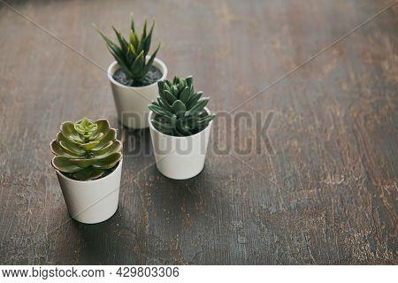 Various Types Of Echeveria, Havortia Succulent House Plants In Clay Pots On Background. Scandinavian