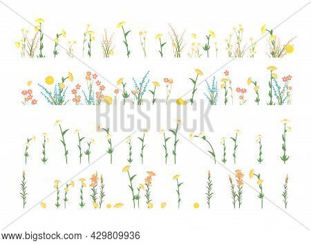 Set Isolated. Meadow With Wildflowers. Grass Close-up. Wild Green Rural Plants. Cartoon Style. Flat