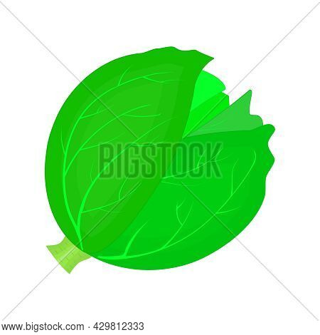 Cabbage Or Lettuce Isolated On White Background. Green Cabbage Head Icon. Kale Farm Market Symbol. W