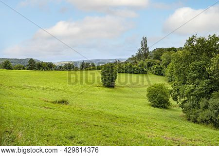 A Lonely Tree Standing In A Field Overgrown With Grass, Forest Hills Visible In The Background.